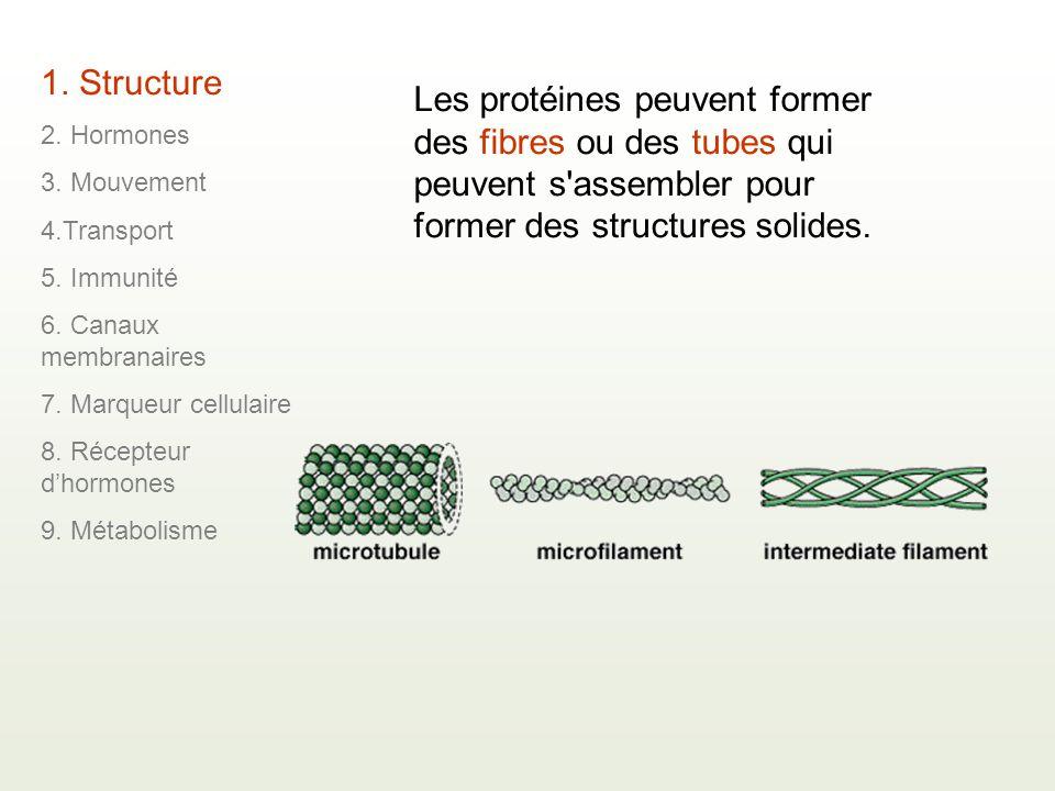 1. Structure 2. Hormones. 3. Mouvement. 4.Transport. 5. Immunité. 6. Canaux membranaires. 7. Marqueur cellulaire.