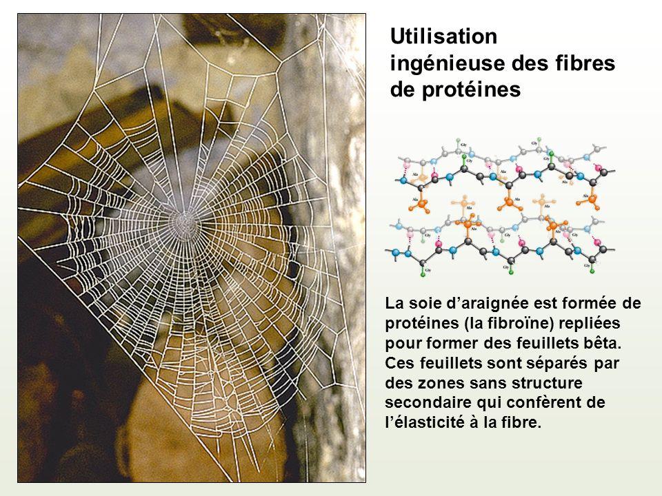 Utilisation ingénieuse des fibres de protéines
