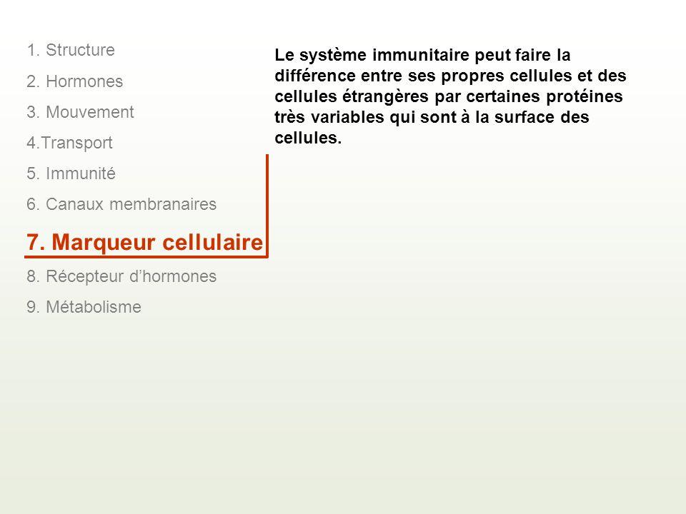7. Marqueur cellulaire 1. Structure