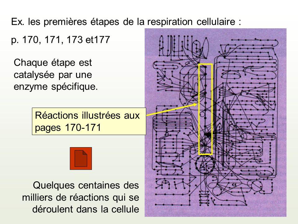 Ex. les premières étapes de la respiration cellulaire :