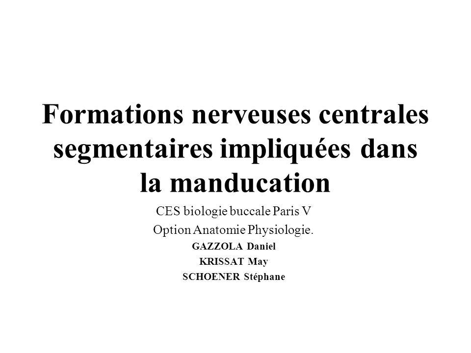 Formations nerveuses centrales segmentaires impliquées dans la manducation