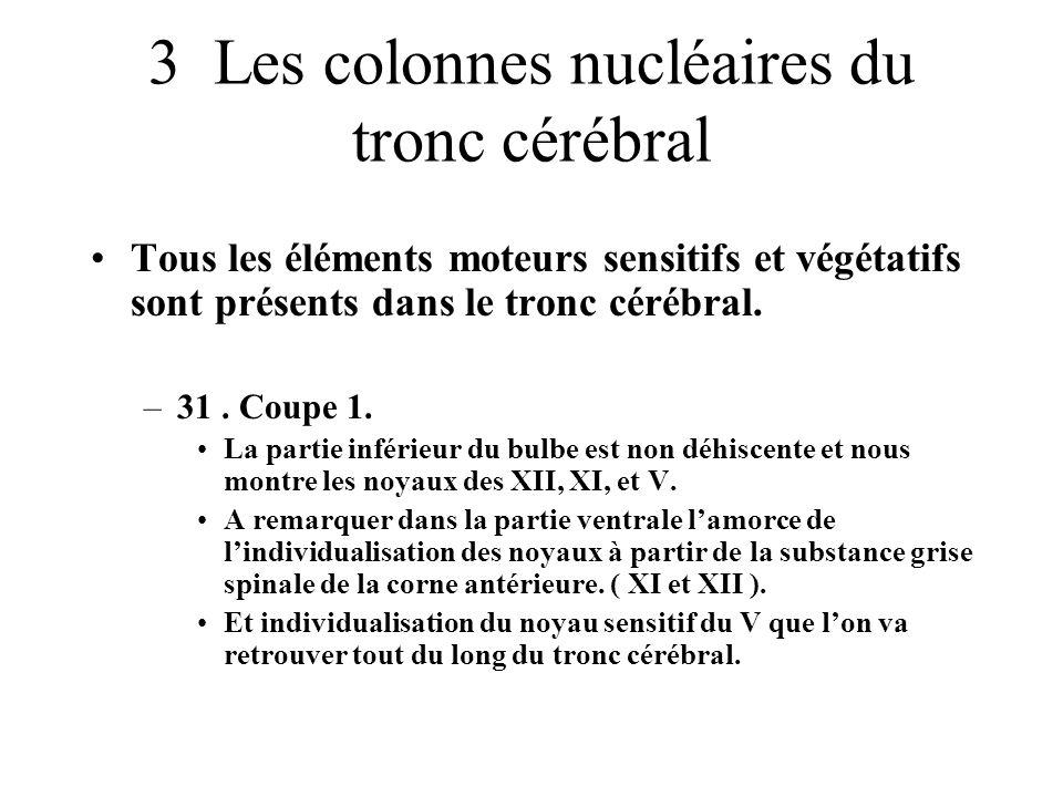 3 Les colonnes nucléaires du tronc cérébral
