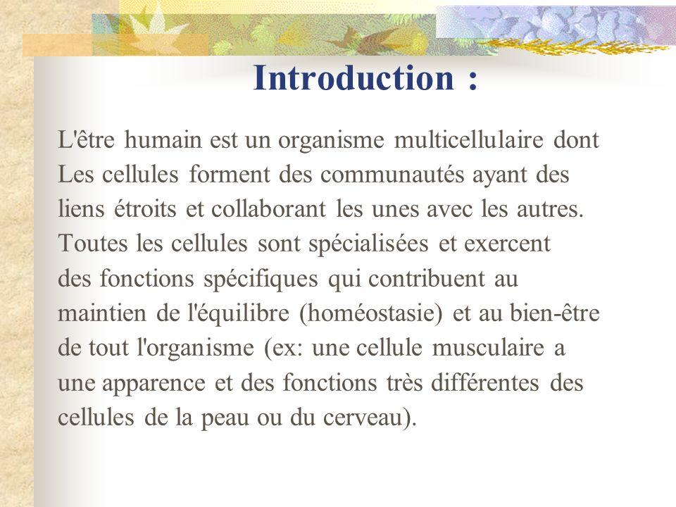 Introduction : L être humain est un organisme multicellulaire dont