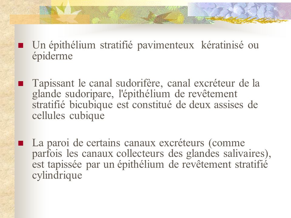 Un épithélium stratifié pavimenteux kératinisé ou épiderme