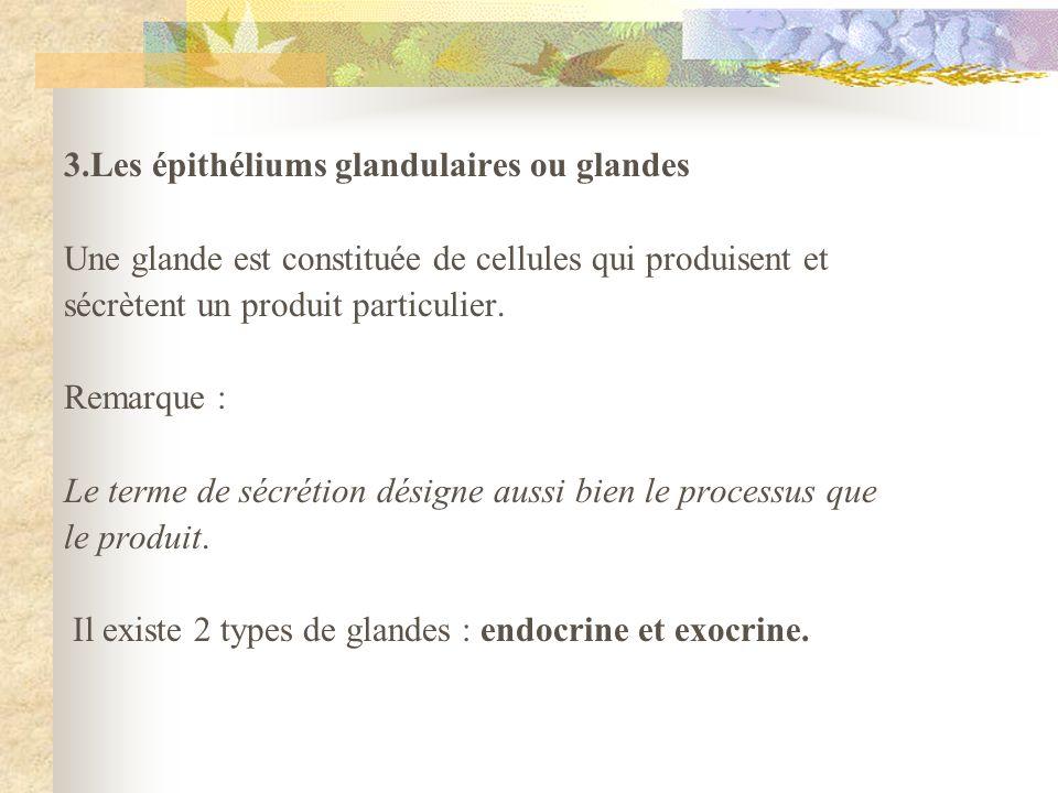 3.Les épithéliums glandulaires ou glandes