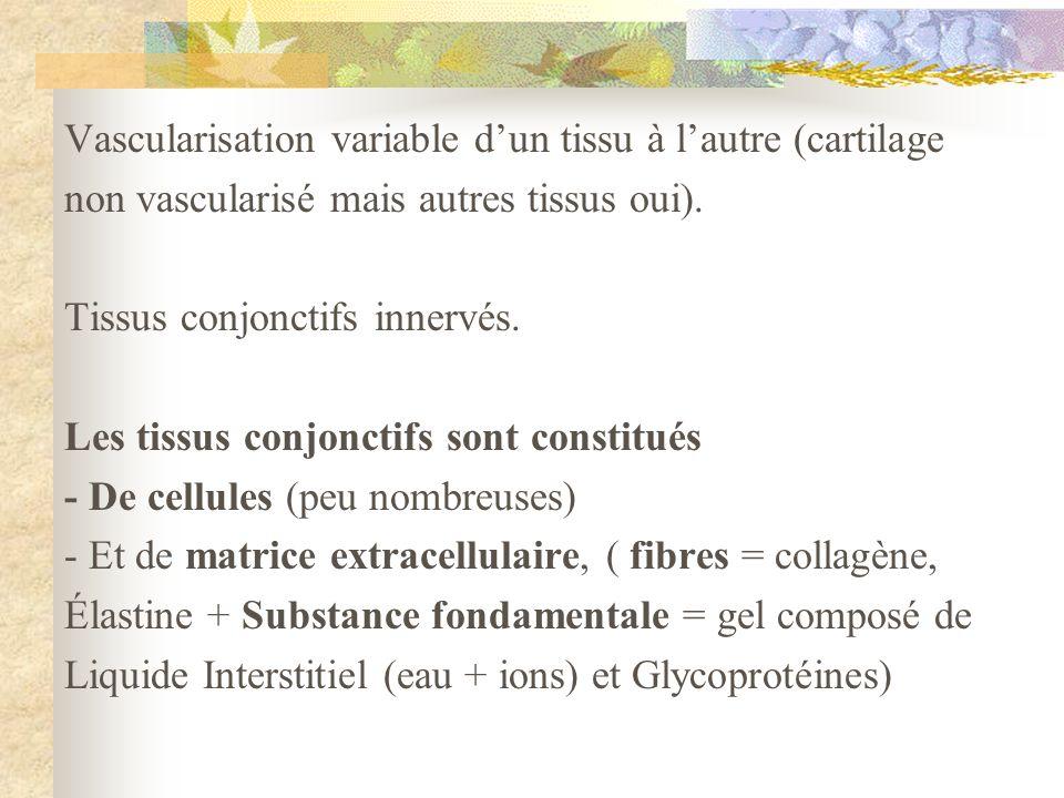 Vascularisation variable d'un tissu à l'autre (cartilage