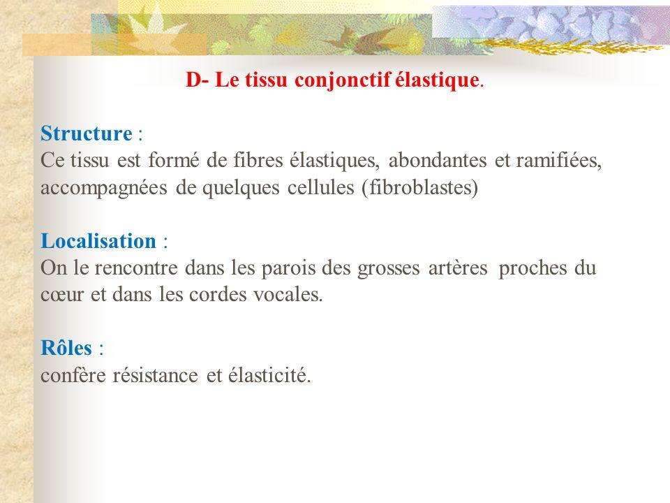 D- Le tissu conjonctif élastique.