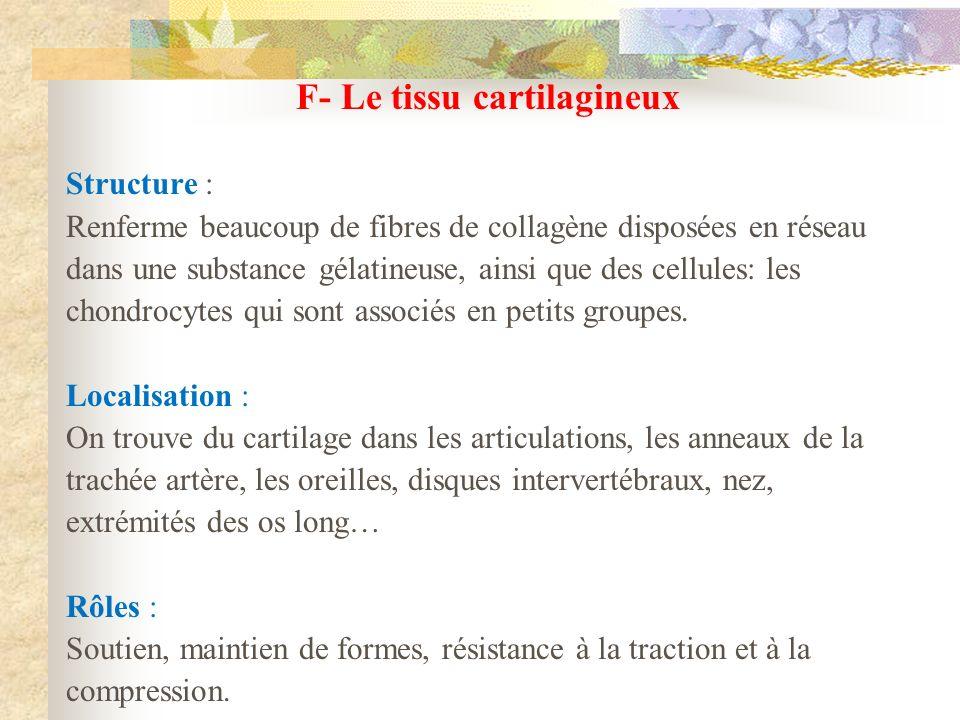 F- Le tissu cartilagineux