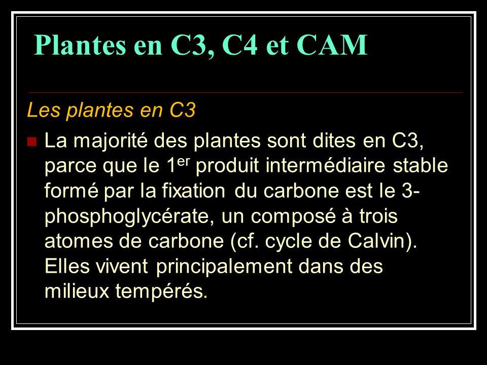 Plantes en C3, C4 et CAM Les plantes en C3