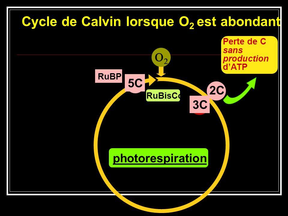 Cycle de Calvin lorsque O2 est abondant