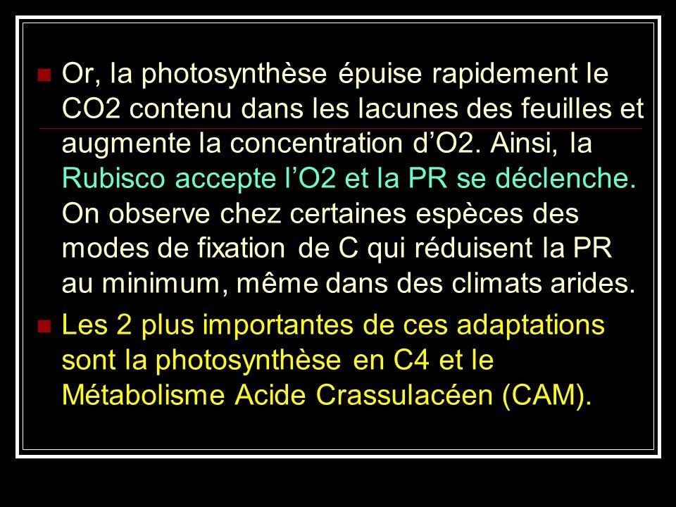 Or, la photosynthèse épuise rapidement le CO2 contenu dans les lacunes des feuilles et augmente la concentration d'O2. Ainsi, la Rubisco accepte l'O2 et la PR se déclenche. On observe chez certaines espèces des modes de fixation de C qui réduisent la PR au minimum, même dans des climats arides.