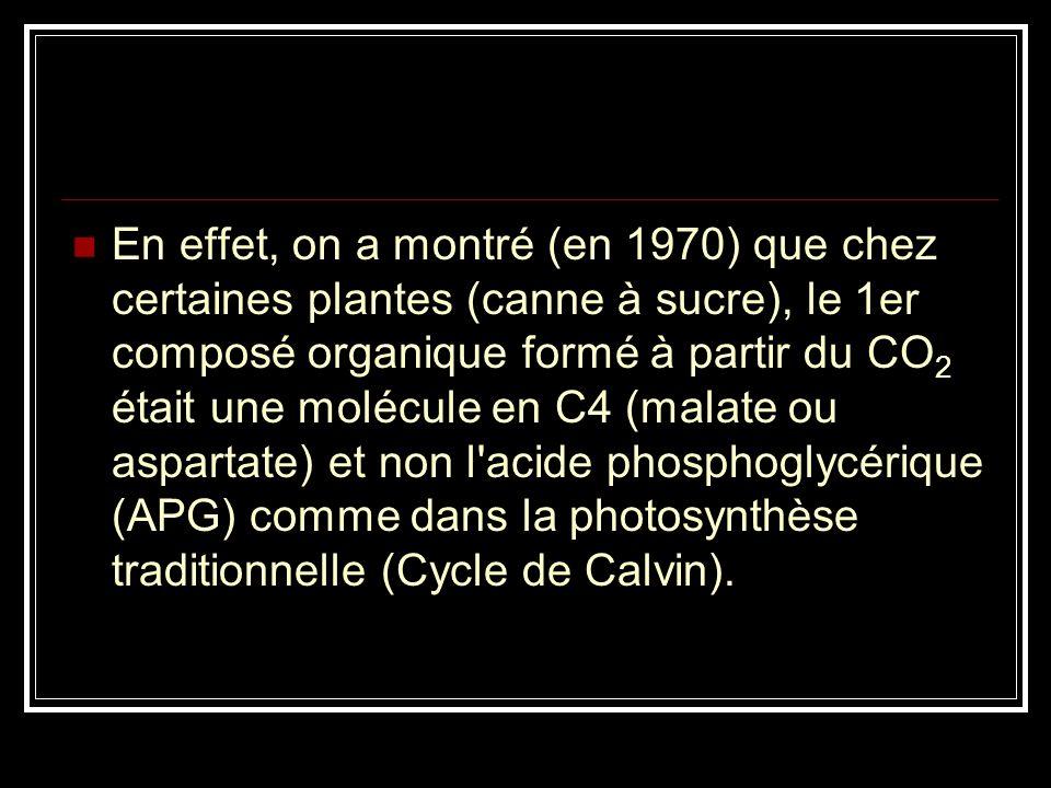 En effet, on a montré (en 1970) que chez certaines plantes (canne à sucre), le 1er composé organique formé à partir du CO2 était une molécule en C4 (malate ou aspartate) et non l acide phosphoglycérique (APG) comme dans la photosynthèse traditionnelle (Cycle de Calvin).