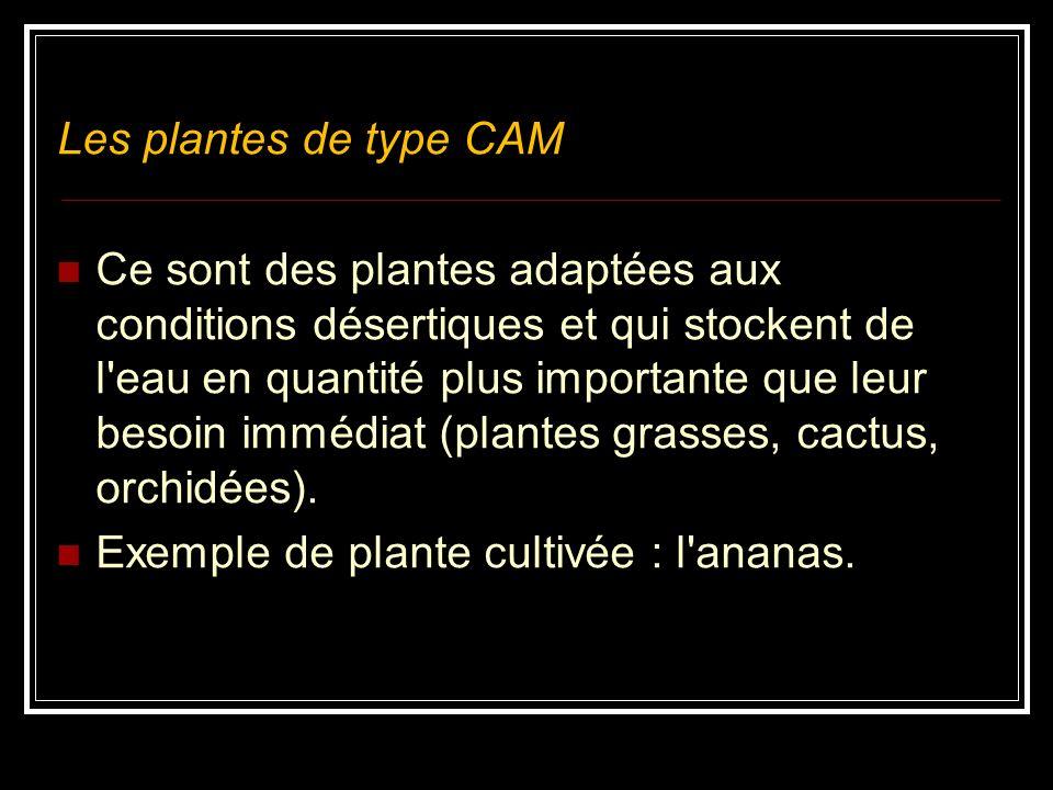 Les plantes de type CAM