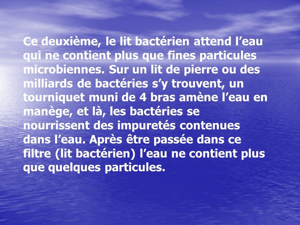 Ce deuxième, le lit bactérien attend l'eau qui ne contient plus que fines particules microbiennes.