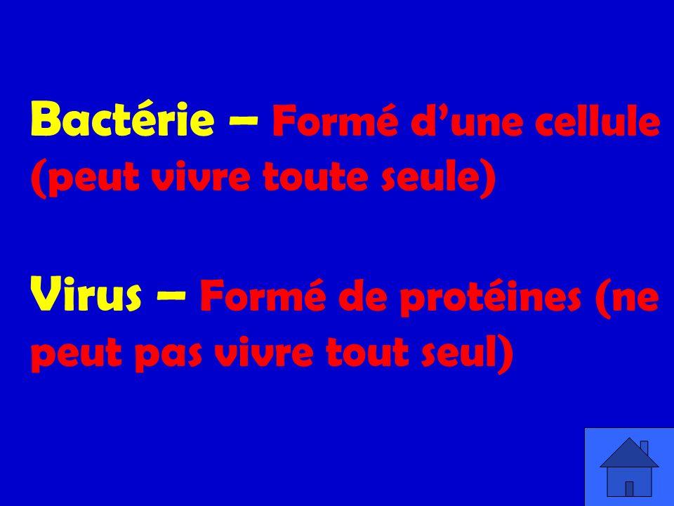 Bactérie – Formé d'une cellule (peut vivre toute seule) Virus – Formé de protéines (ne peut pas vivre tout seul)