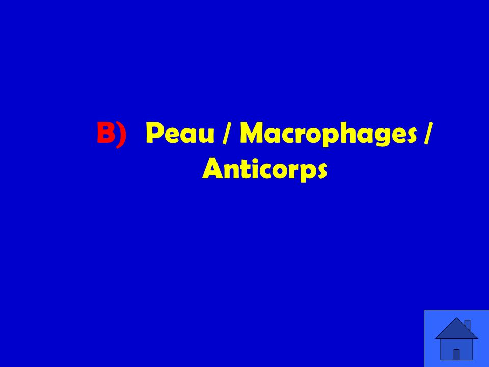 B) Peau / Macrophages / Anticorps