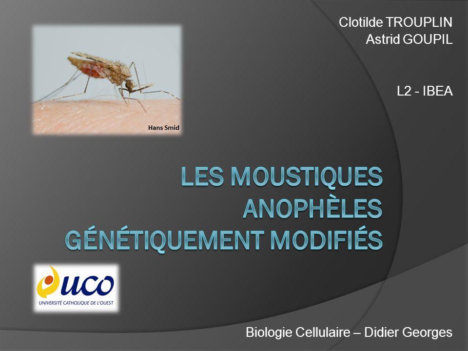 Les moustiques anophèles génétiquement modifiés