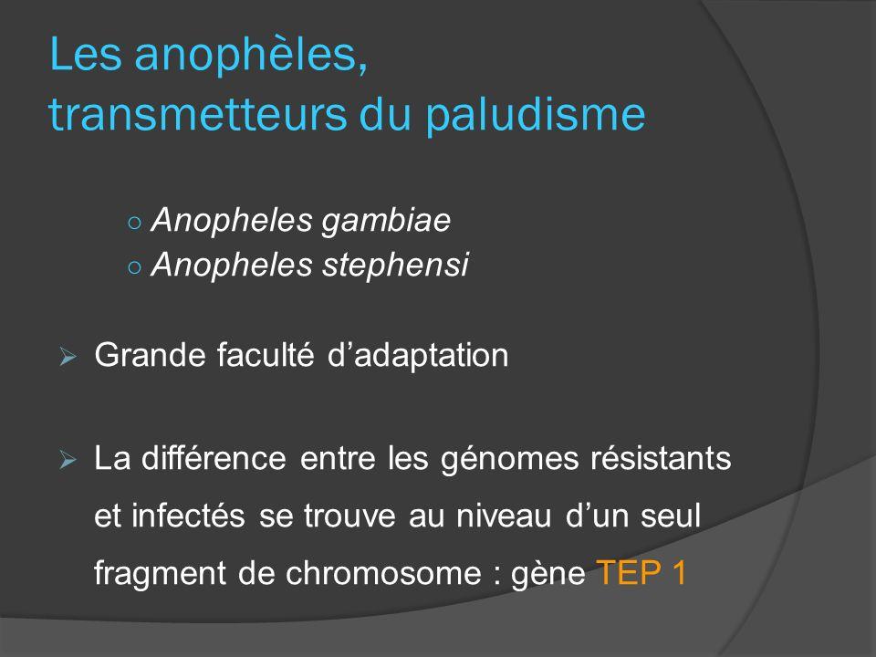 Les anophèles, transmetteurs du paludisme