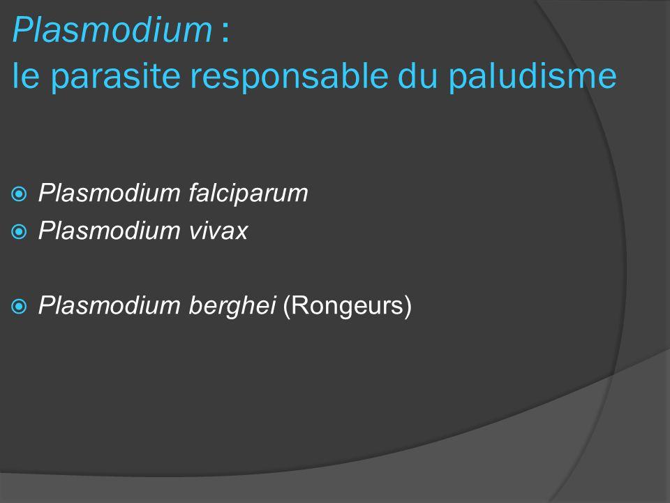 Plasmodium : le parasite responsable du paludisme