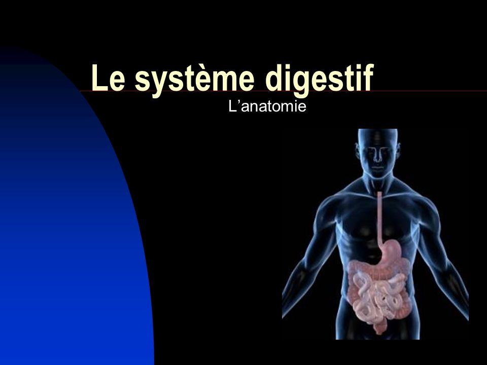 Le système digestif L'anatomie