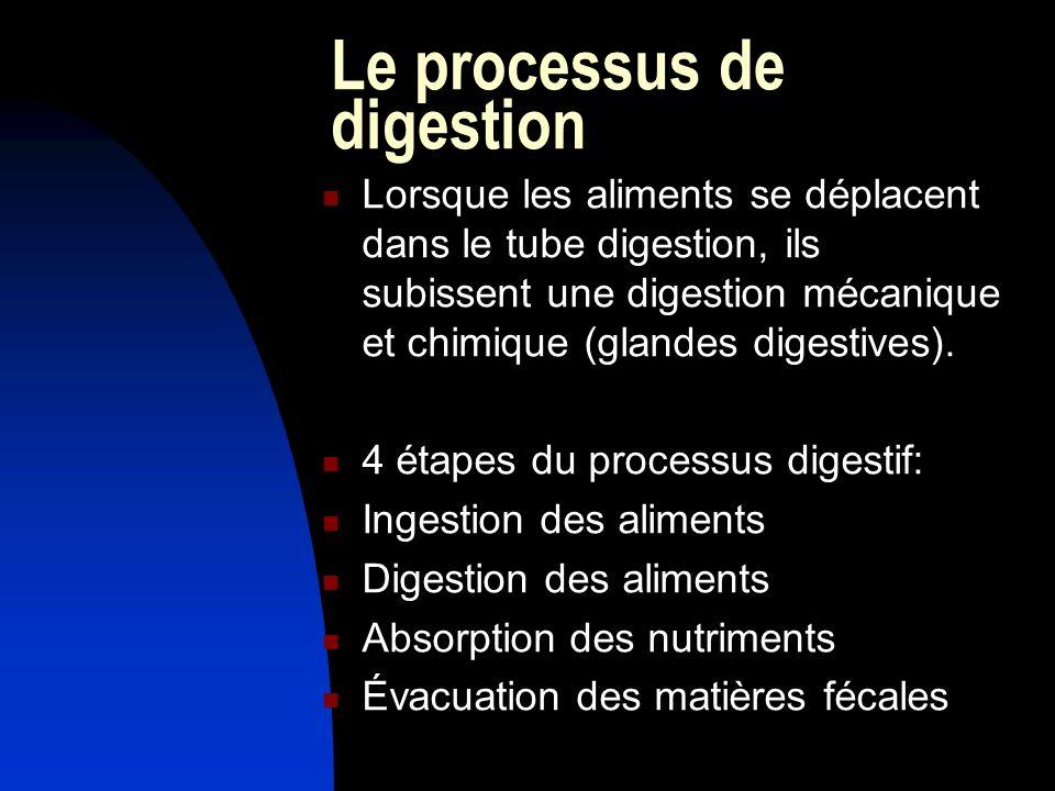 Le processus de digestion