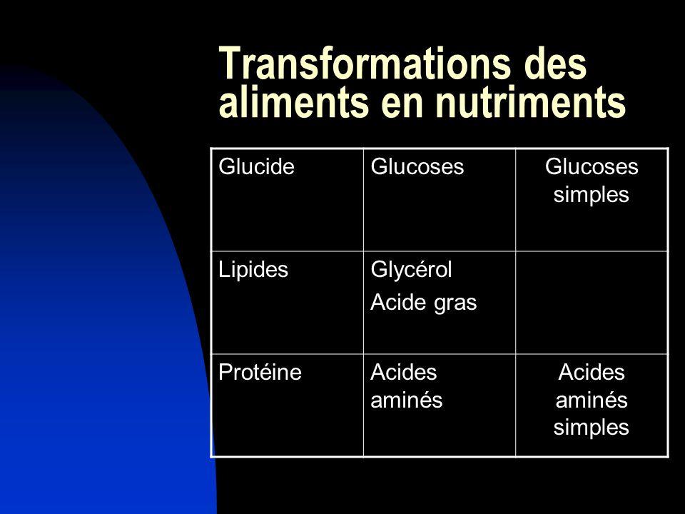 Transformations des aliments en nutriments
