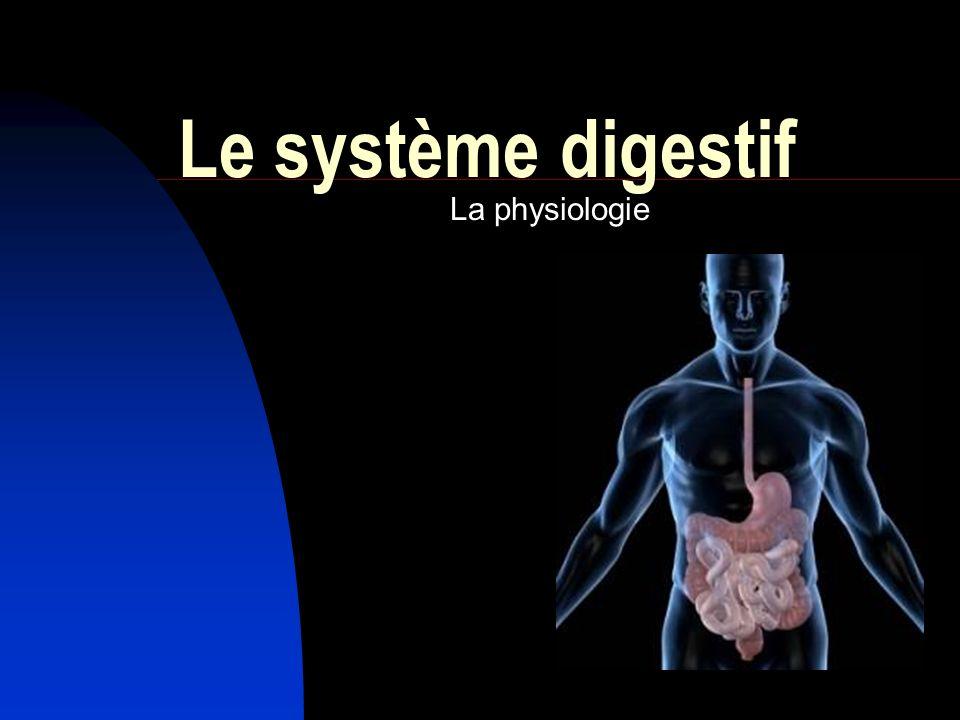 Le système digestif La physiologie