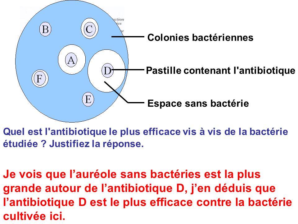 bréal Colonies bactériennes. Pastille contenant l antibiotique. Espace sans bactérie.