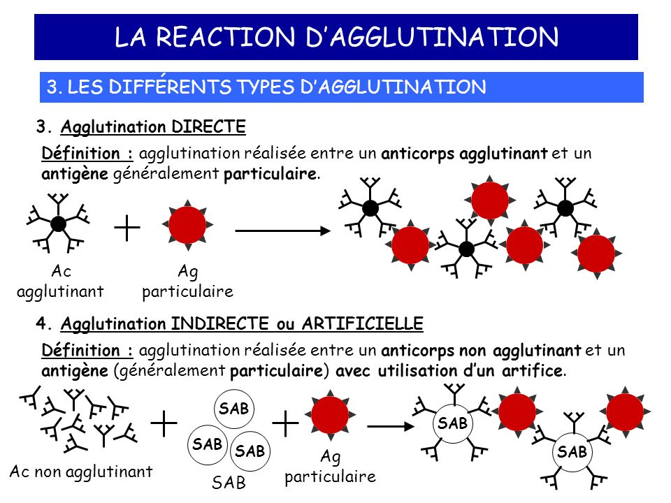 LA REACTION D'AGGLUTINATION