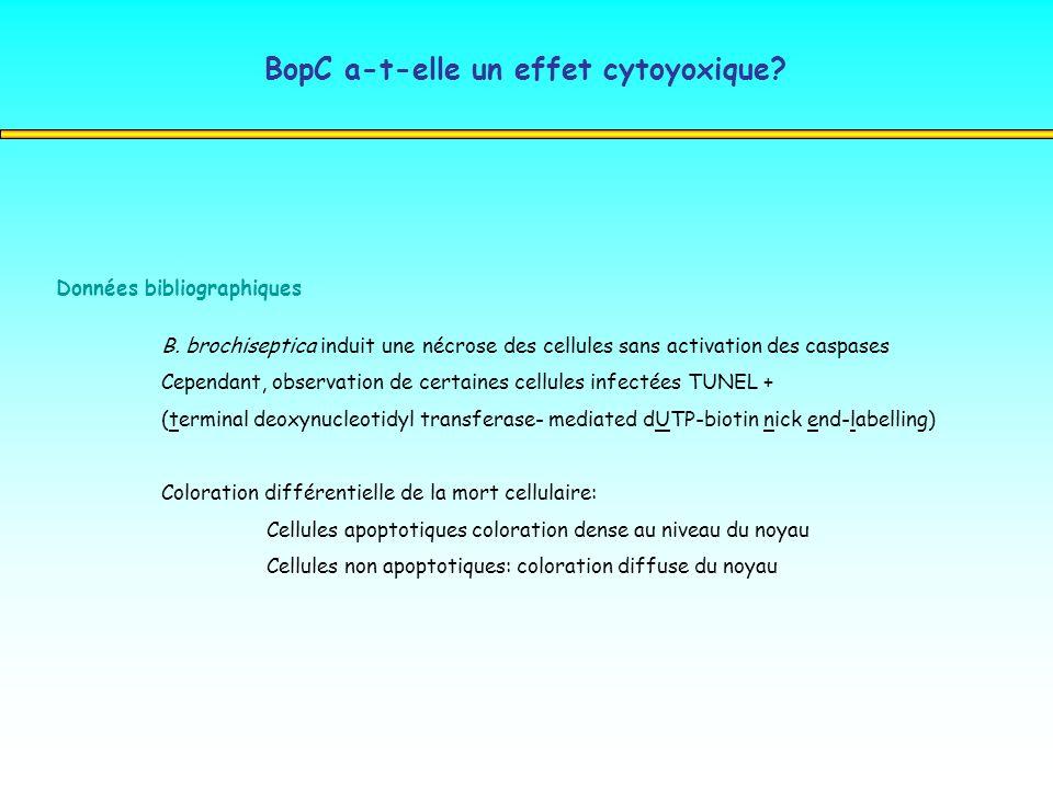 BopC a-t-elle un effet cytoyoxique