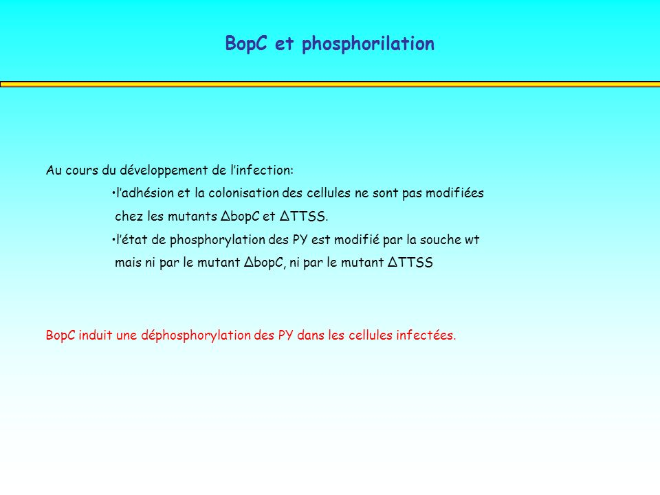 BopC et phosphorilation