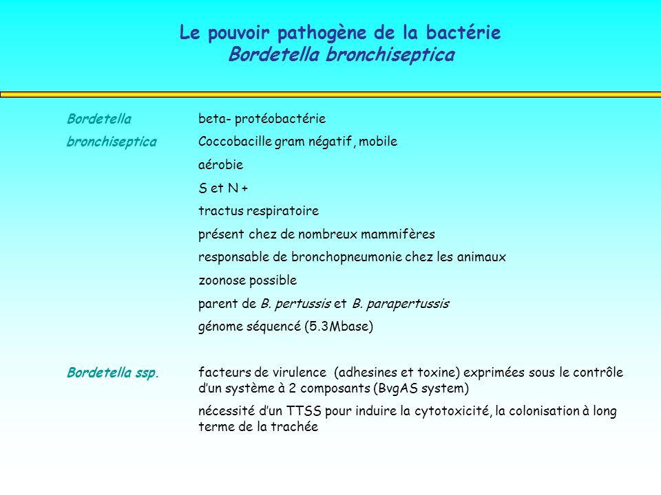 Le pouvoir pathogène de la bactérie Bordetella bronchiseptica