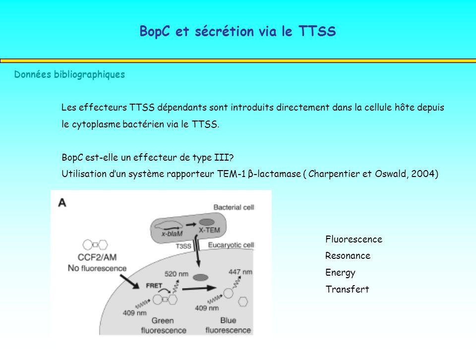 BopC et sécrétion via le TTSS