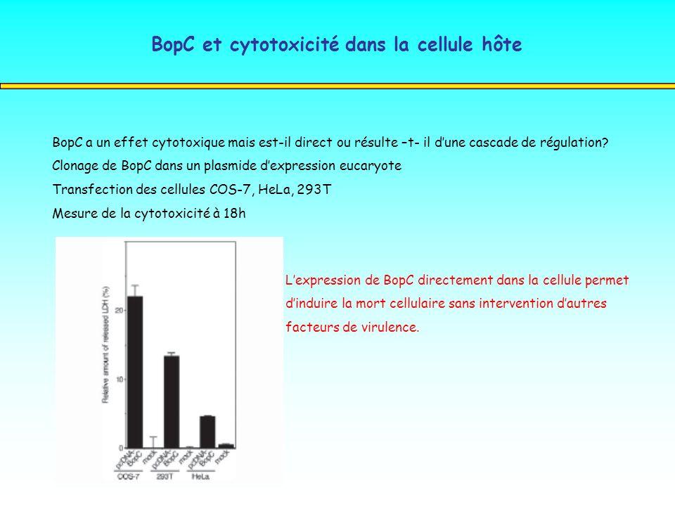 BopC et cytotoxicité dans la cellule hôte