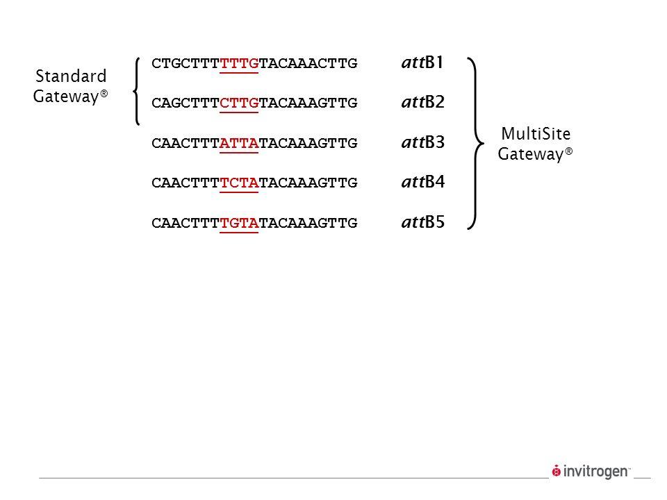 CTGCTTTTTTGTACAAACTTG attB1. CAGCTTTCTTGTACAAAGTTG attB2. CAACTTTATTATACAAAGTTG attB3.