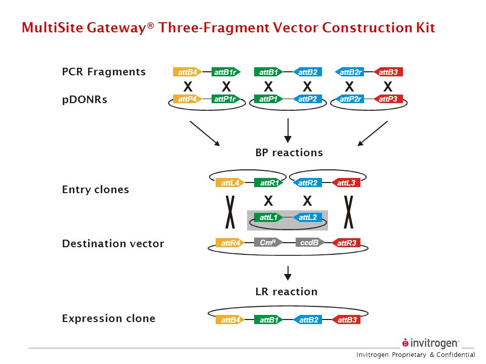 MultiSite Gateway® Three-Fragment Vector Construction Kit