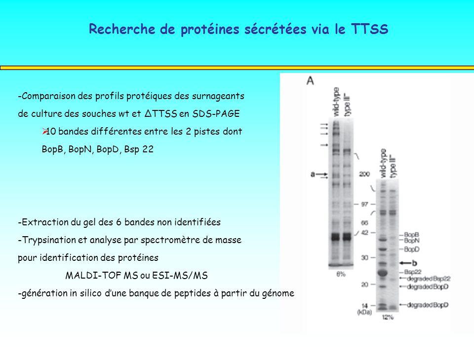 Recherche de protéines sécrétées via le TTSS