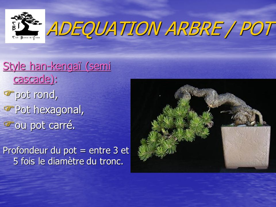ADEQUATION ARBRE / POT Style han-kengaï (semi cascade): pot rond,