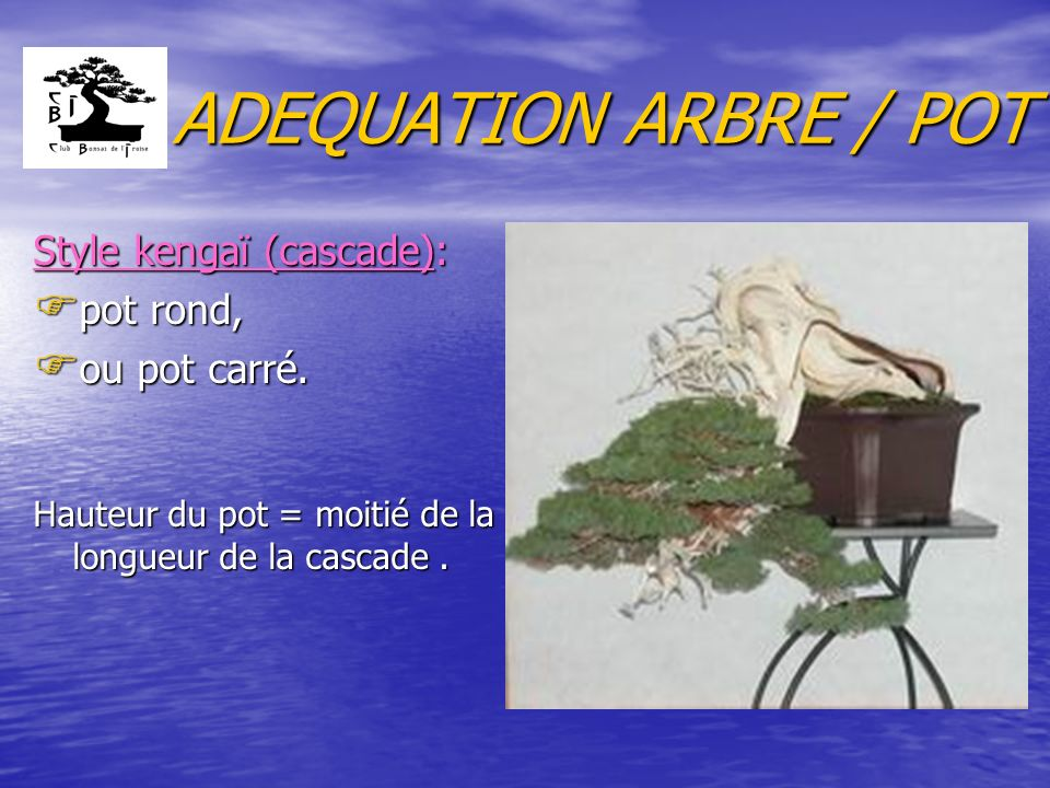 ADEQUATION ARBRE / POT Style kengaï (cascade): pot rond, ou pot carré.