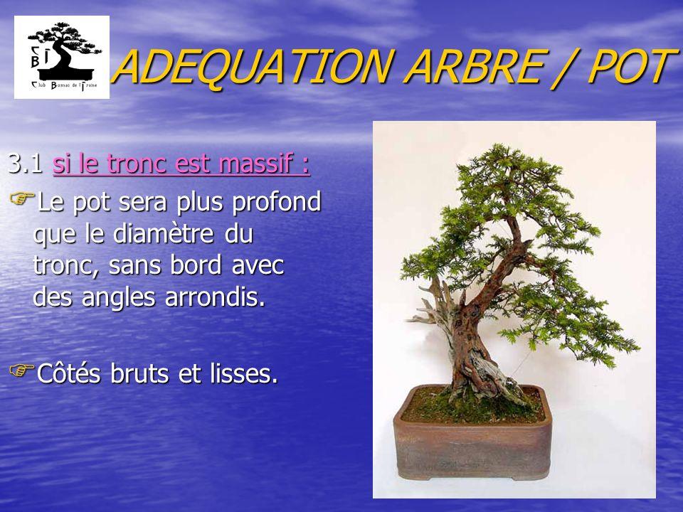 ADEQUATION ARBRE / POT 3.1 si le tronc est massif :