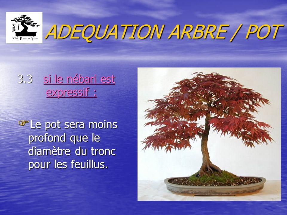 ADEQUATION ARBRE / POT 3.3 si le nébari est expressif :