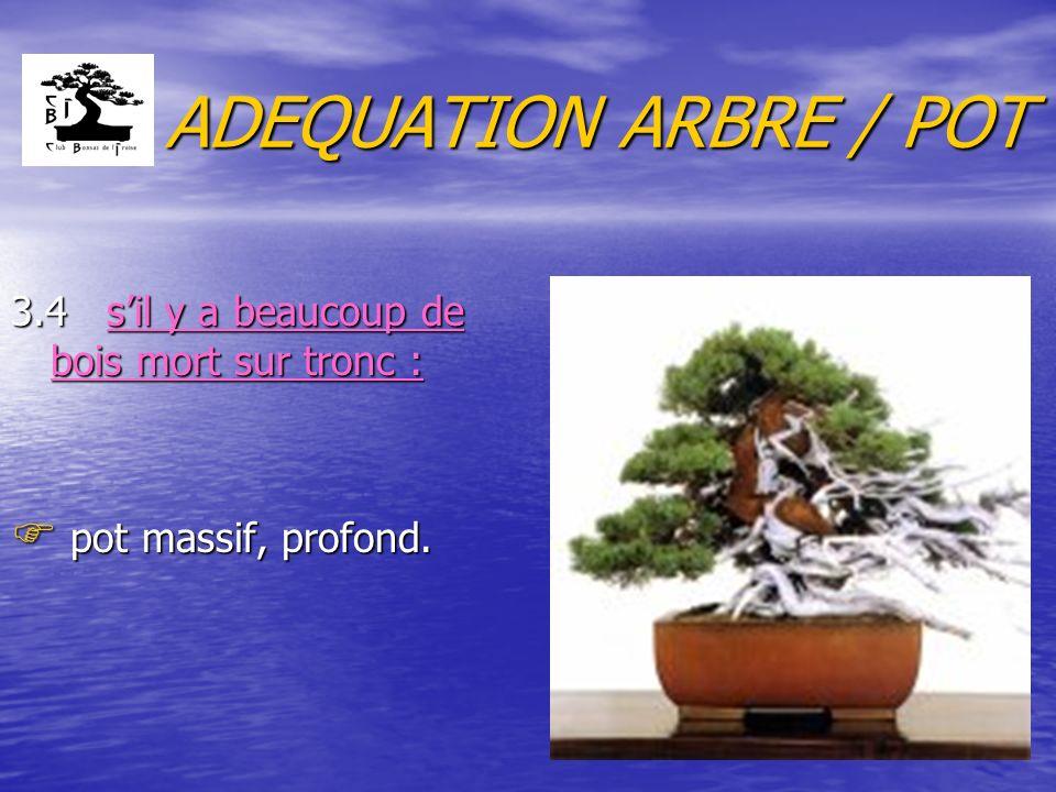 ADEQUATION ARBRE / POT 3.4 s'il y a beaucoup de bois mort sur tronc :