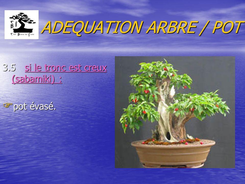 ADEQUATION ARBRE / POT 3.5 si le tronc est creux (sabamiki) :