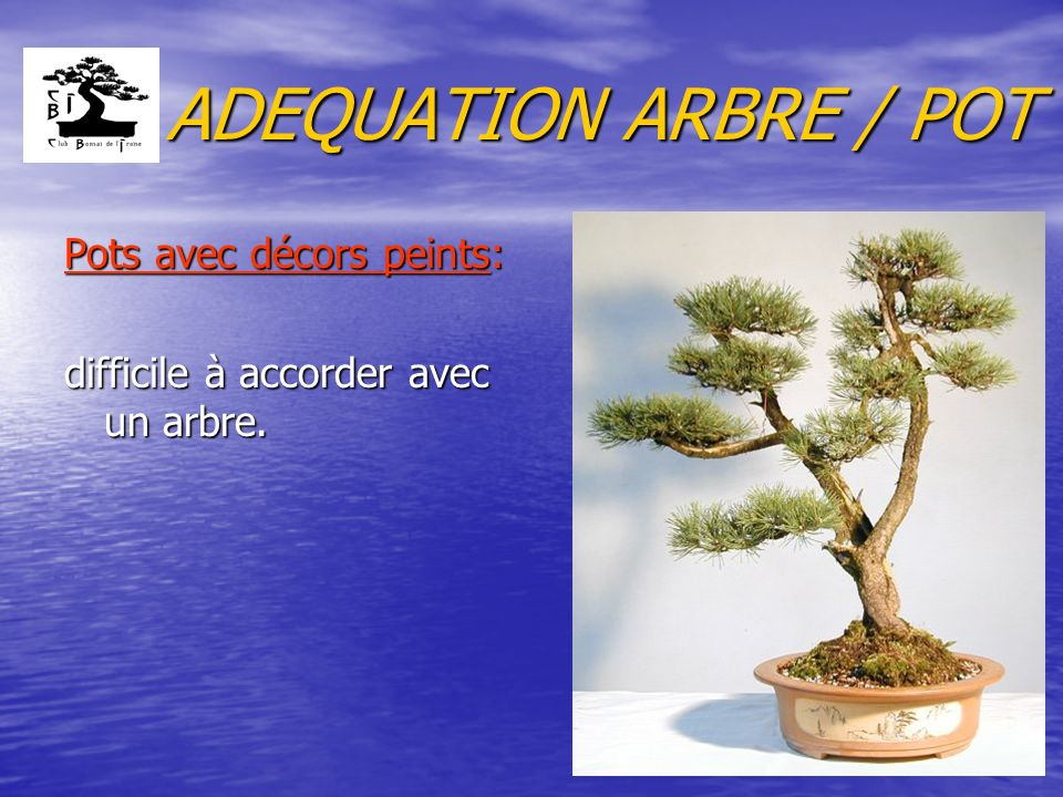 ADEQUATION ARBRE / POT Pots avec décors peints: difficile à accorder avec un arbre.