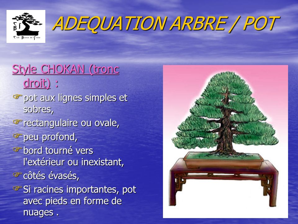 ADEQUATION ARBRE / POT Style CHOKAN (tronc droit) :