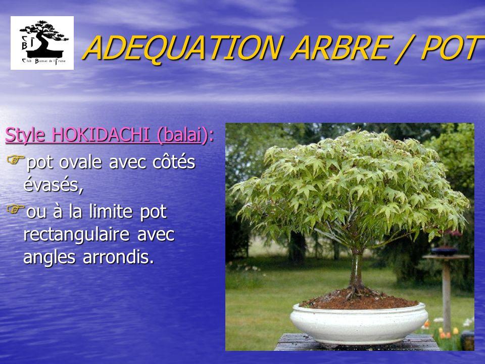 ADEQUATION ARBRE / POT Style HOKIDACHI (balai):