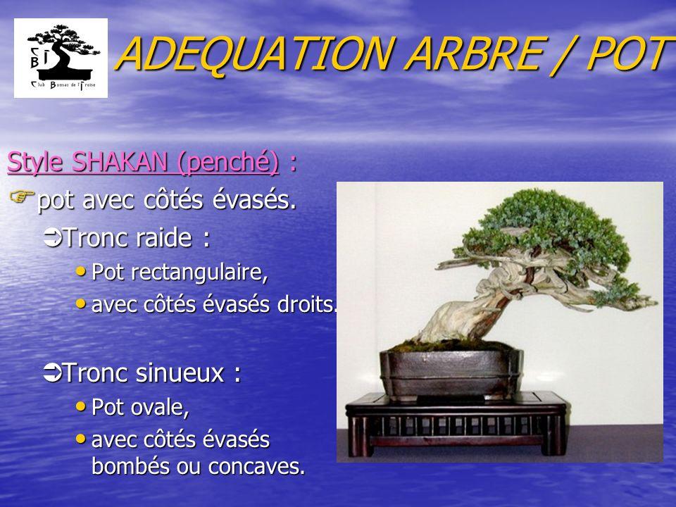 ADEQUATION ARBRE / POT Style SHAKAN (penché) : pot avec côtés évasés.