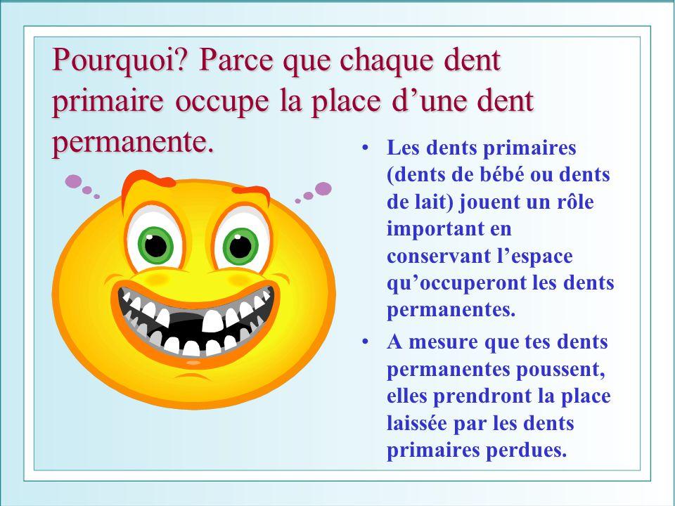 Pourquoi Parce que chaque dent primaire occupe la place d'une dent permanente.