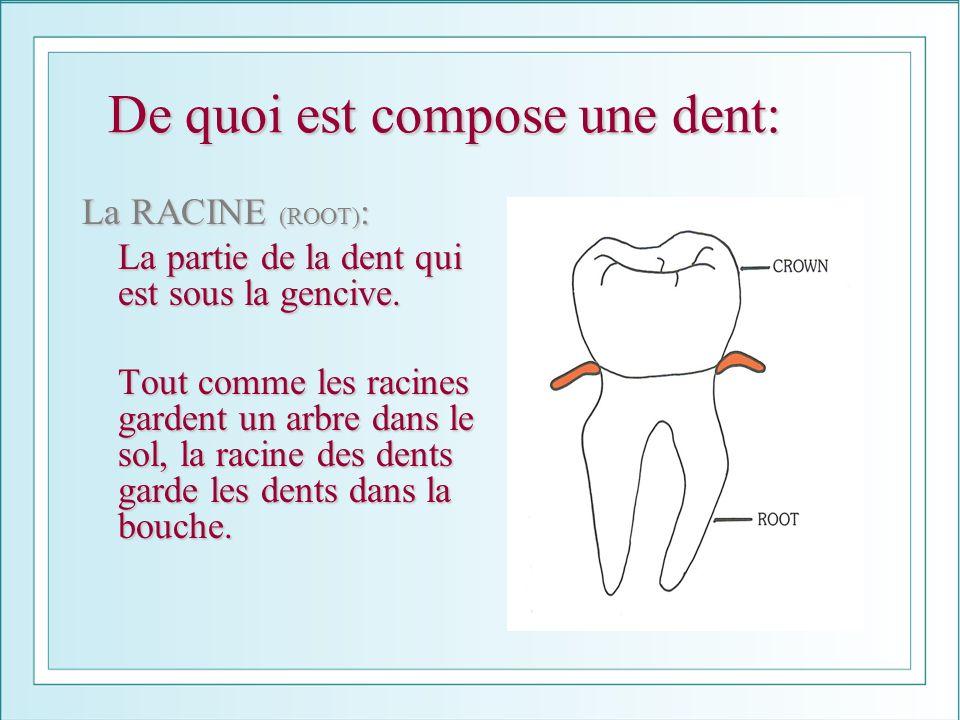 De quoi est compose une dent: