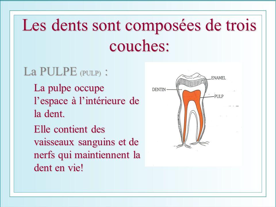 Les dents sont composées de trois couches: